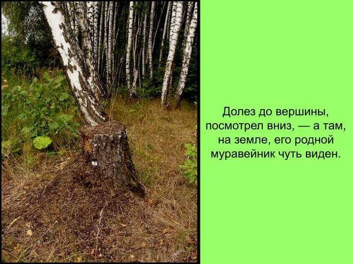 Долез до вершины, посмотрел вниз, — а там, на земле, его родной муравейник чуть виден.