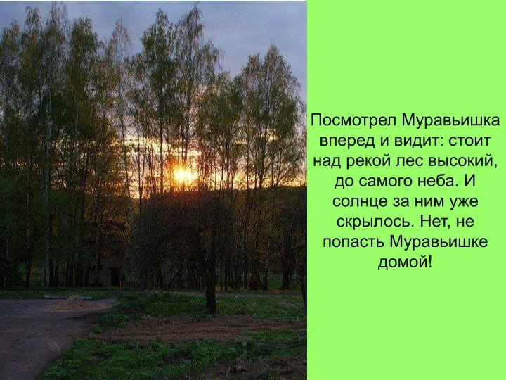 Посмотрел Муравьишка вперед и видит: стоит над рекой лес высокий, до самого неба. И солнце за ним уже скрылось. Нет, не попасть Муравьишке домой!