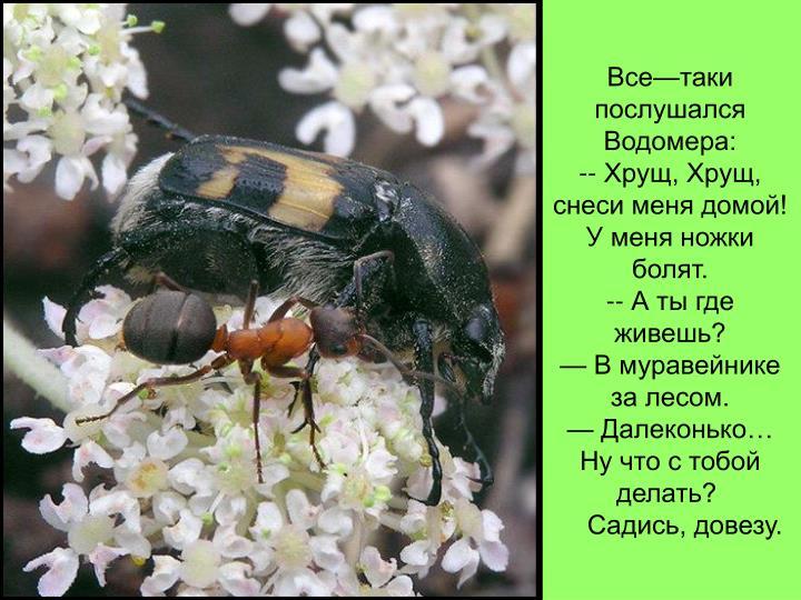 Все—таки послушался Водомера: