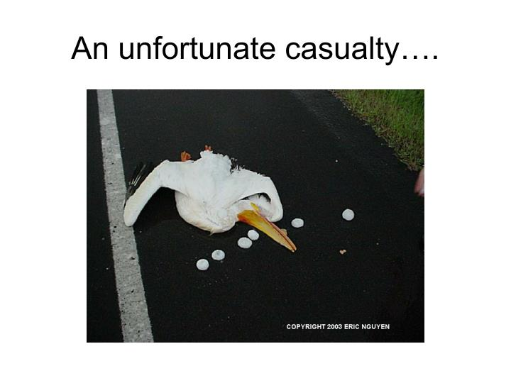An unfortunate casualty….