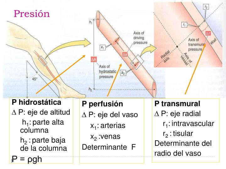 P hidrostática