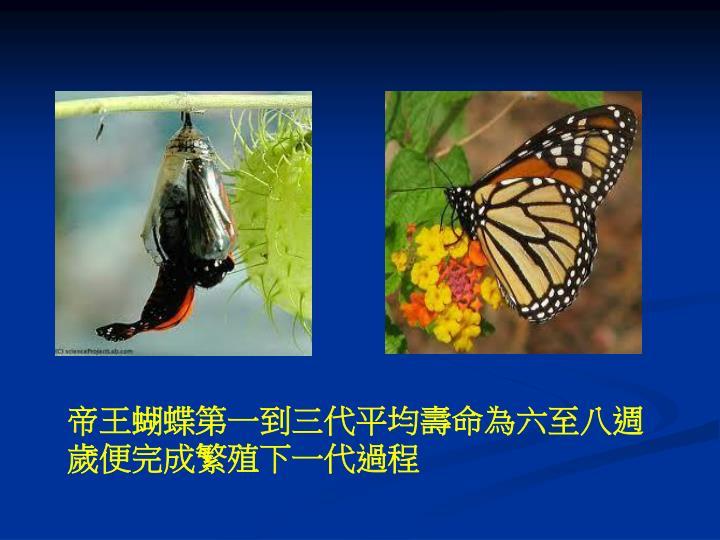 帝王蝴蝶第一到三代平均壽命為六至八週歲便完成繁殖下一代過程