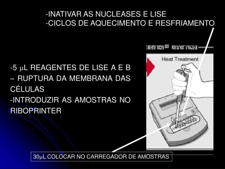 INATIVAR AS NUCLEASES E LISE