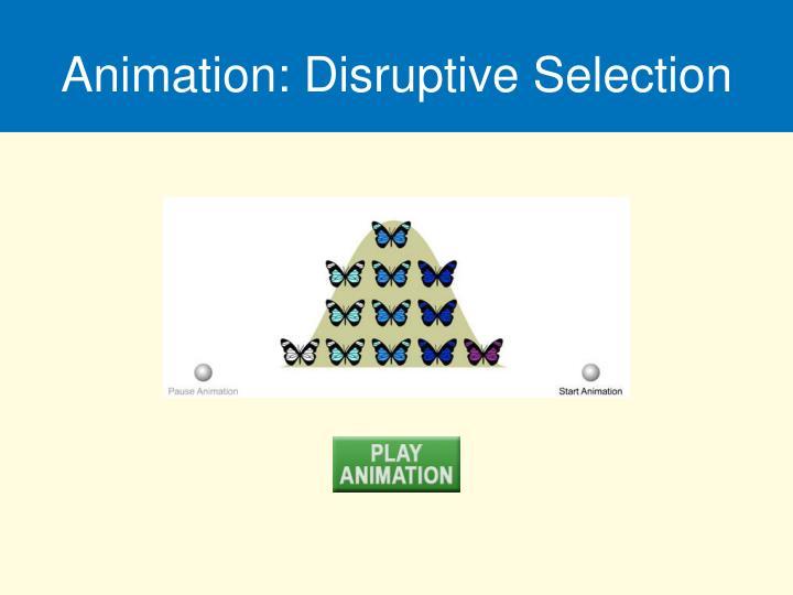Animation: Disruptive Selection