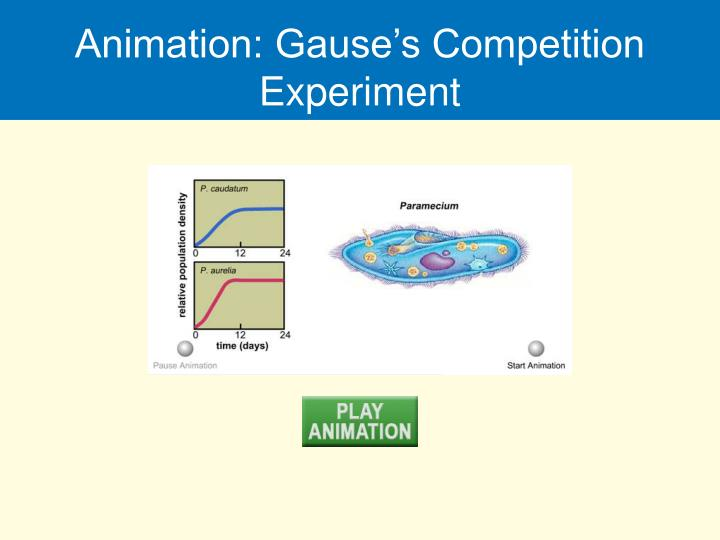 Animation: Gause's Competition Experiment