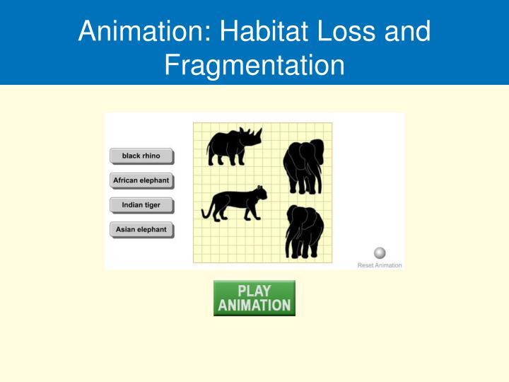 Animation: Habitat Loss and Fragmentation