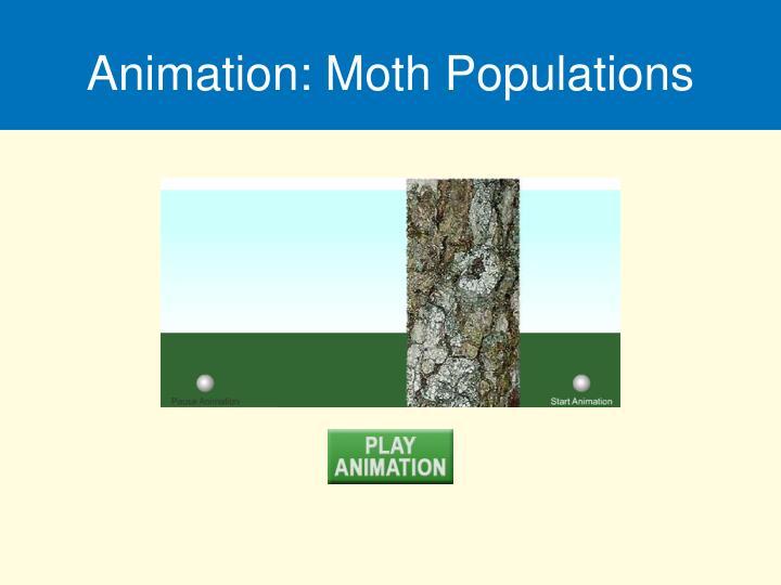 Animation: Moth Populations