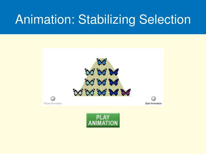 Animation: Stabilizing Selection