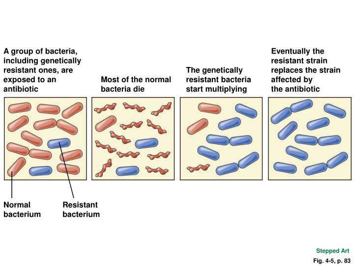 A group of bacteria, including genetically resistant ones, are