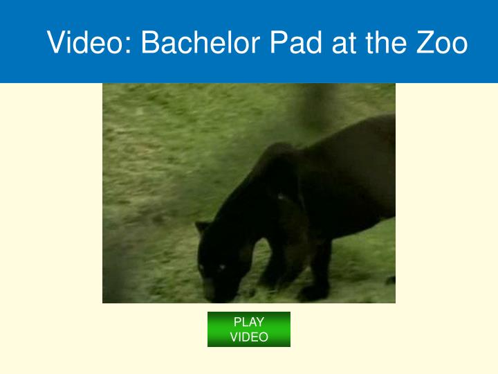 Video: Bachelor Pad at the Zoo