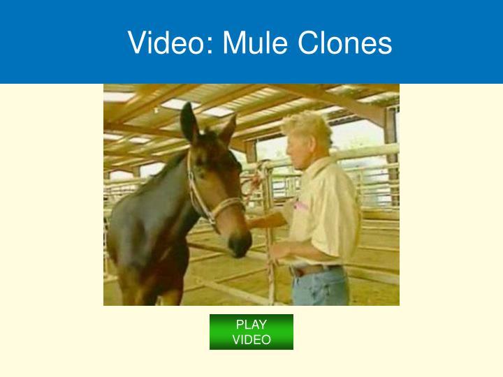 Video: Mule Clones