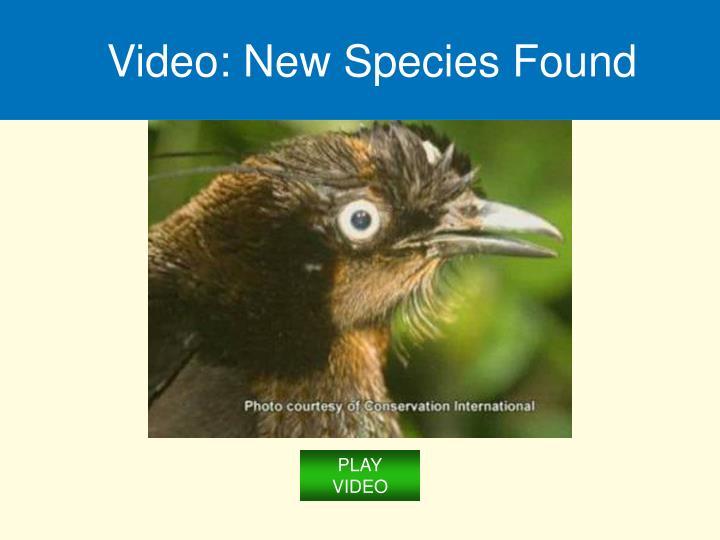 Video: New Species Found