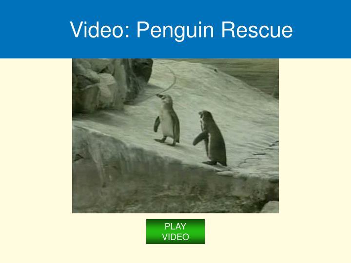 Video: Penguin Rescue