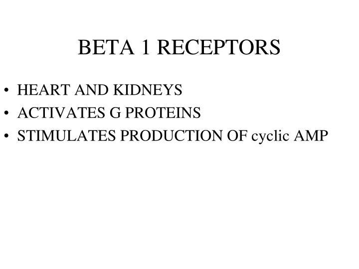 BETA 1 RECEPTORS