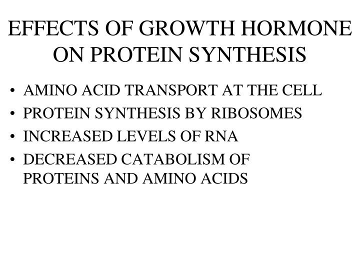 EFFECTS OF GROWTH HORMONE ON PROTEIN SYNTHESIS