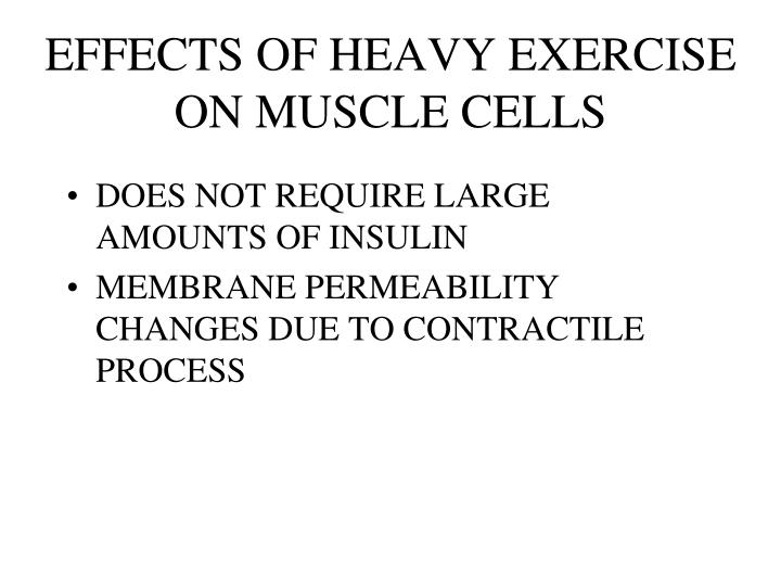EFFECTS OF HEAVY EXERCISE ON MUSCLE CELLS