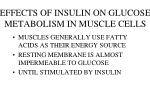effects of insulin on glucose metabolism in muscle cells