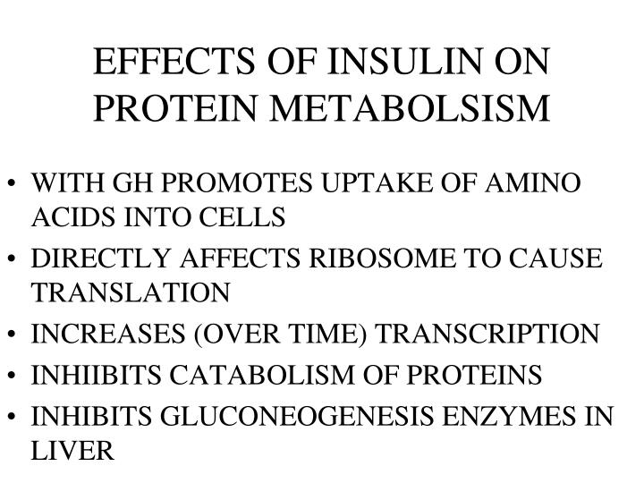 EFFECTS OF INSULIN ON PROTEIN METABOLSISM