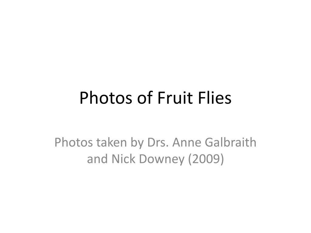 Photos of Fruit Flies