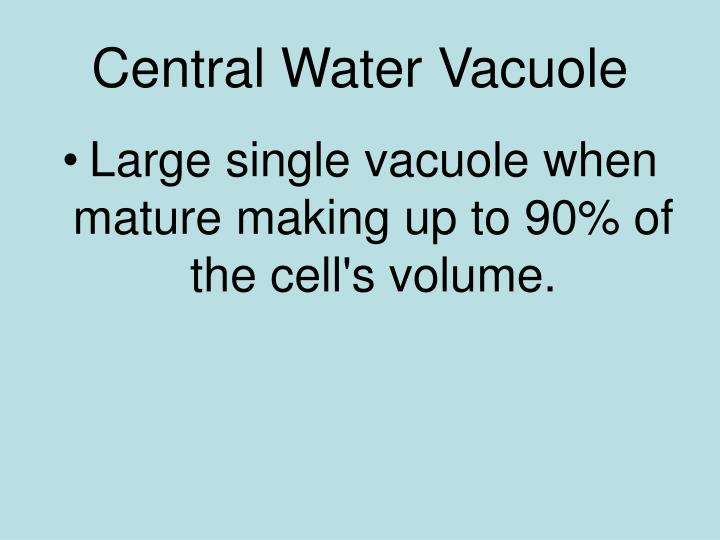 Central Water Vacuole
