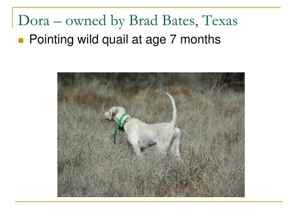 Dora – owned by Brad Bates, Texas