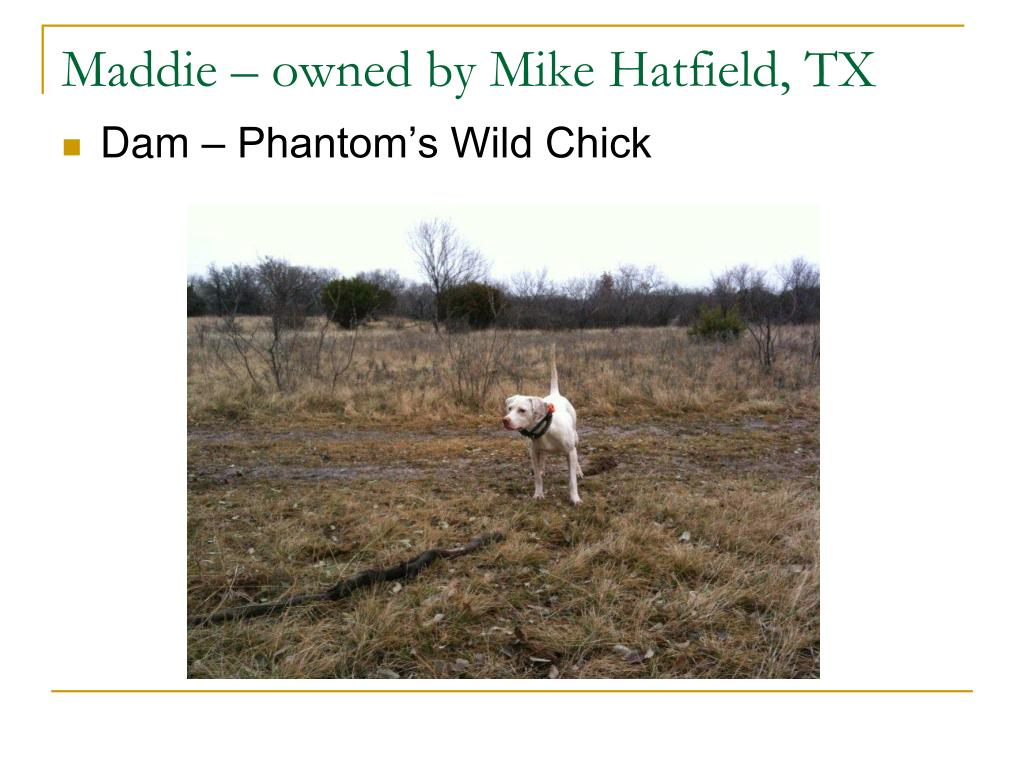 Maddie – owned by Mike Hatfield, TX
