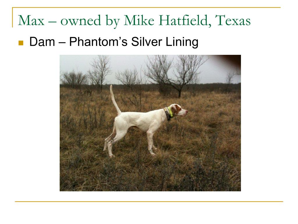 Max – owned by Mike Hatfield, Texas