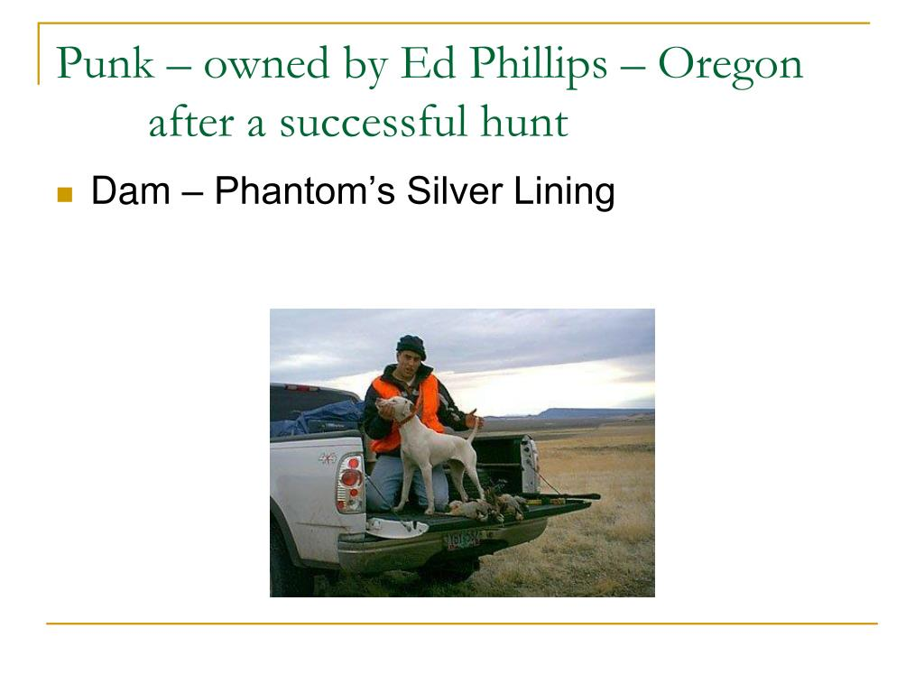Punk – owned by Ed Phillips – Oregon