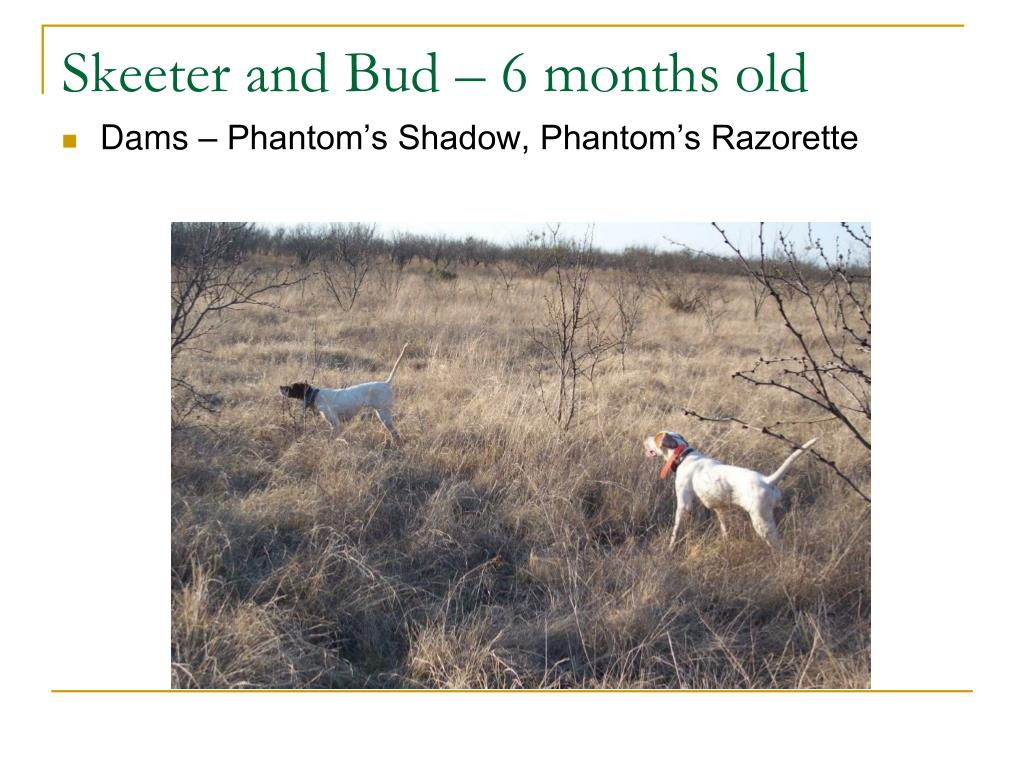 Skeeter and Bud – 6 months old