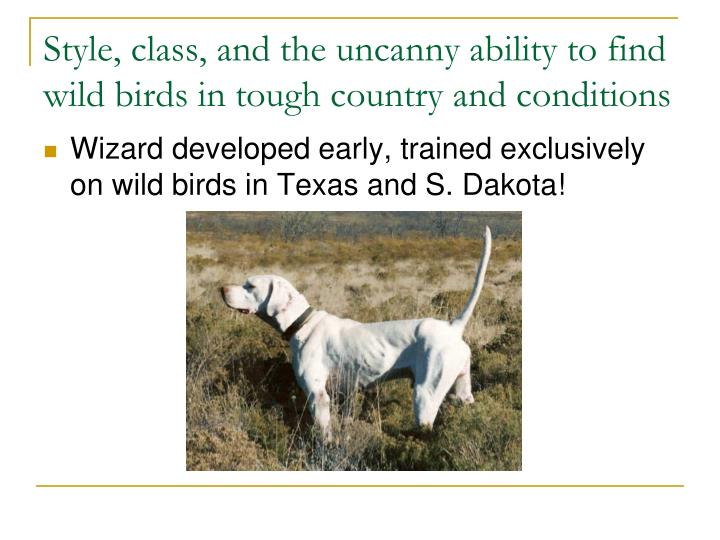 Style class and the uncanny ability to find wild birds in tough country and conditions