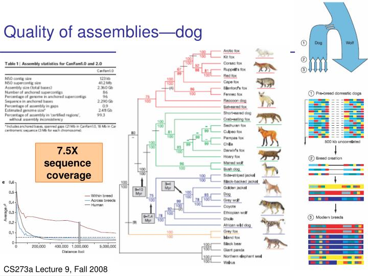 Quality of assemblies—dog