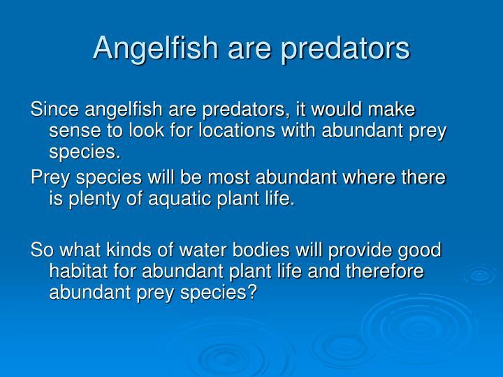 Angelfish are predators