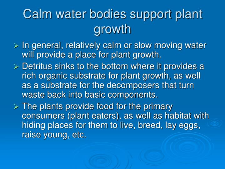 Calm water bodies support plant growth