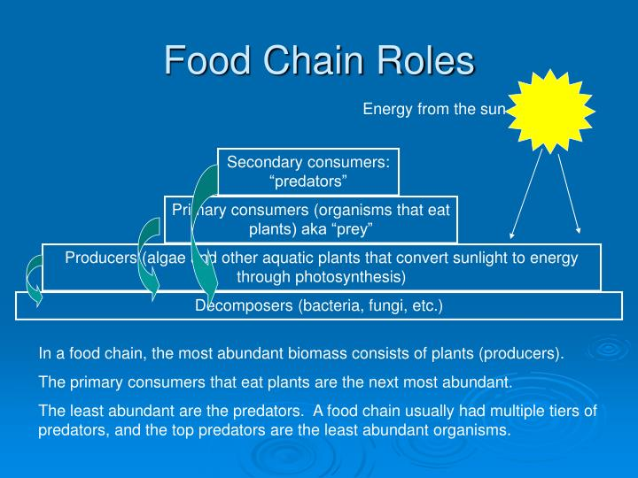 Food Chain Roles