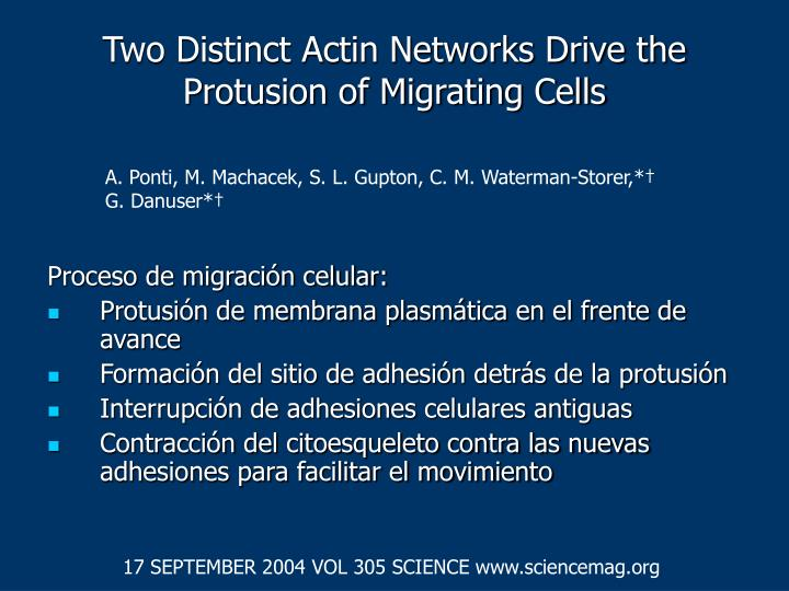 Two distinct actin networks drive the protusion of migrating cells