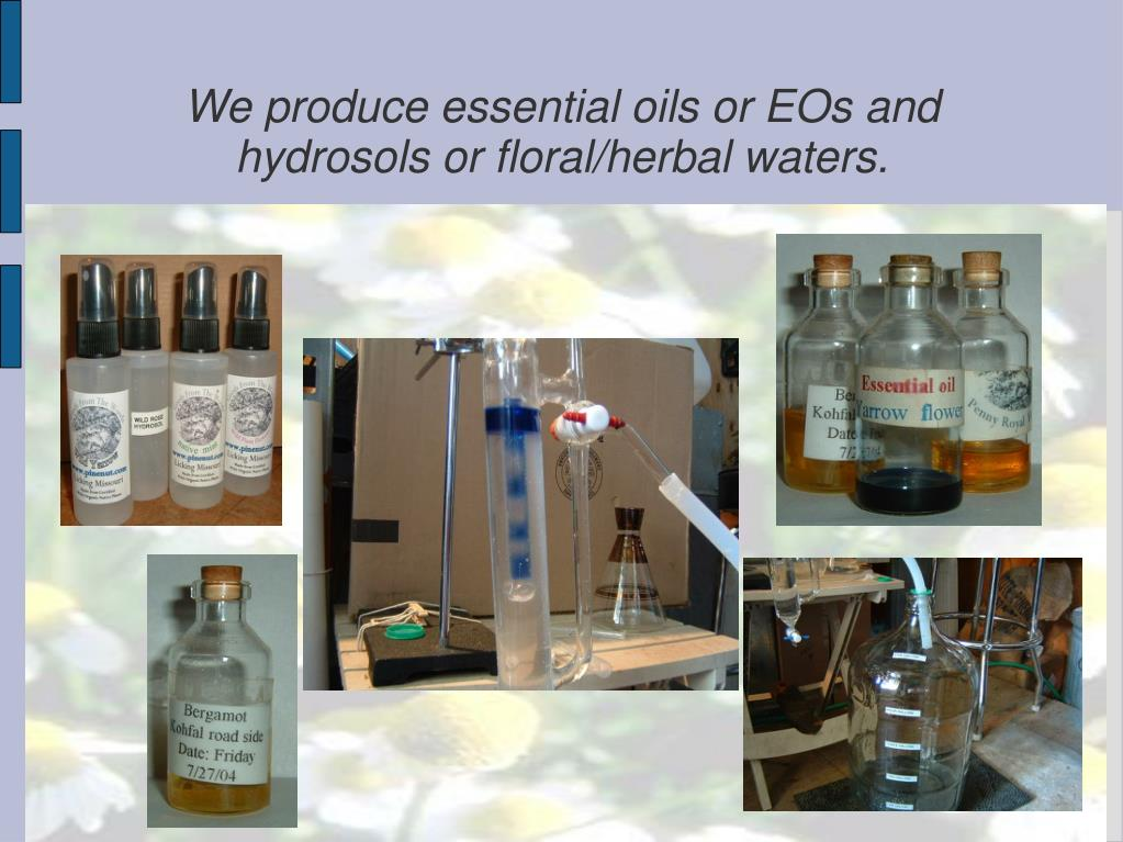 We produce essential oils or EOs and hydrosols or floral/herbal waters.