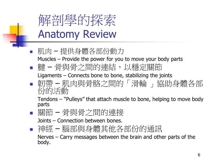 解剖學的探索