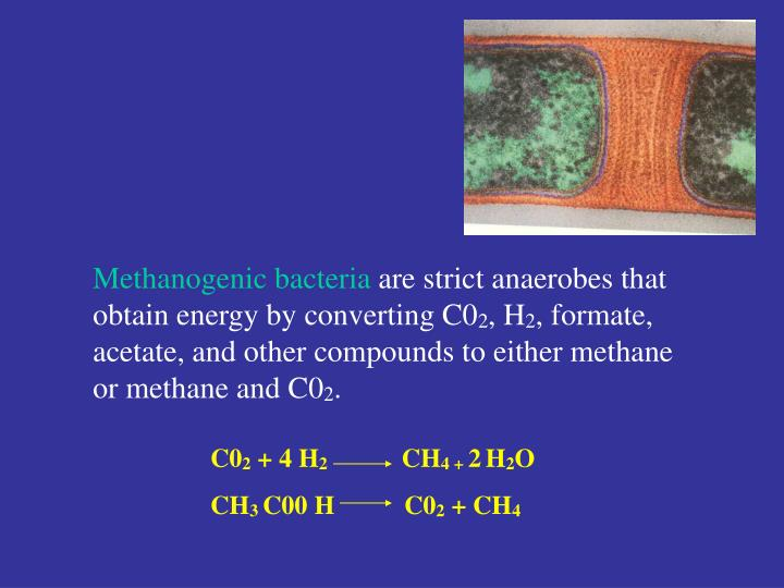 Methanogenic bacteria