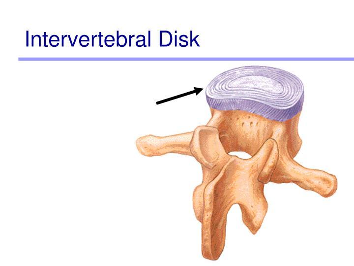 Intervertebral Disk