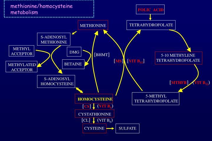 methionine/homocysteine