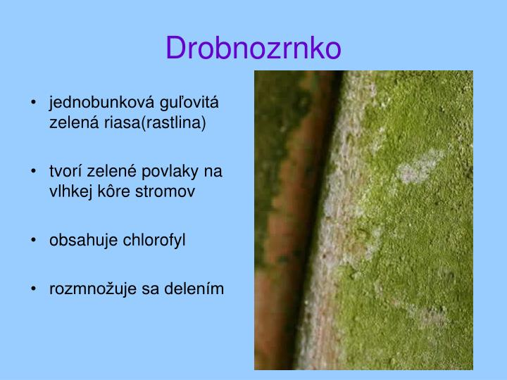 jednobunková guľovitá zelená riasa(rastlina)