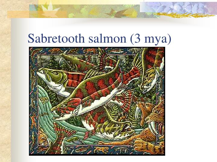 Sabretooth salmon (3 mya)