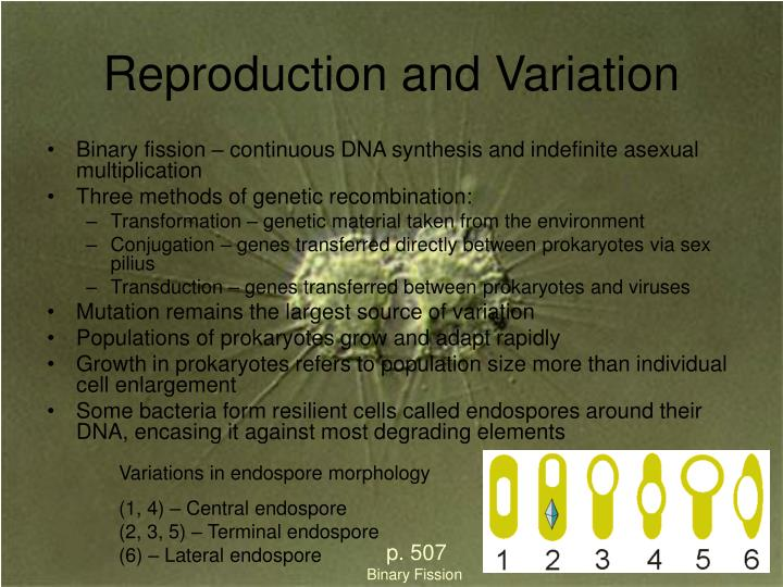 Reproduction and Variation