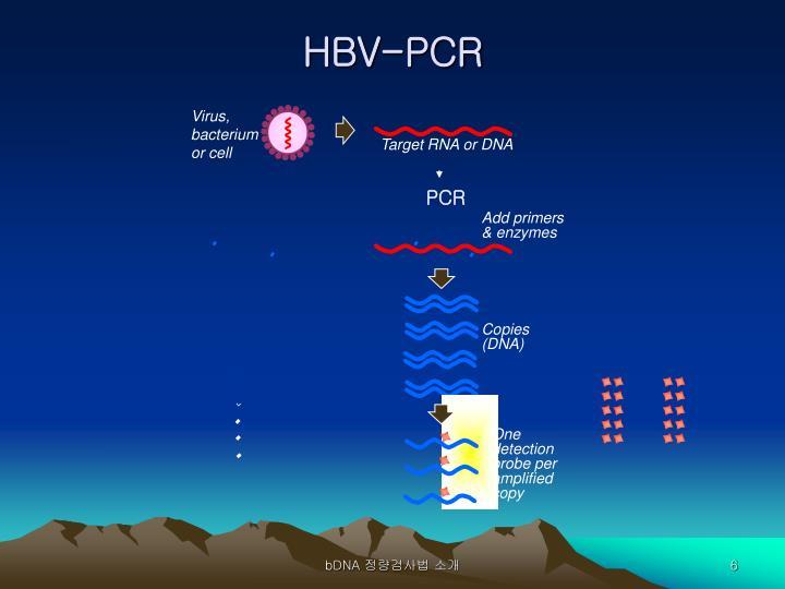 Virus, bacterium