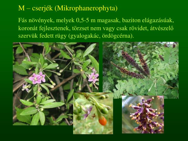 M – cserjék (Mikrophanerophyta)