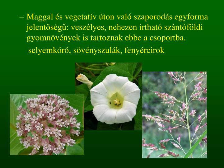 Maggal és vegetatív úton való szaporodás egyforma jelentőségű: veszélyes, nehezen irtható szántóföldi gyomnövények is tartoznak ebbe a csoportba.