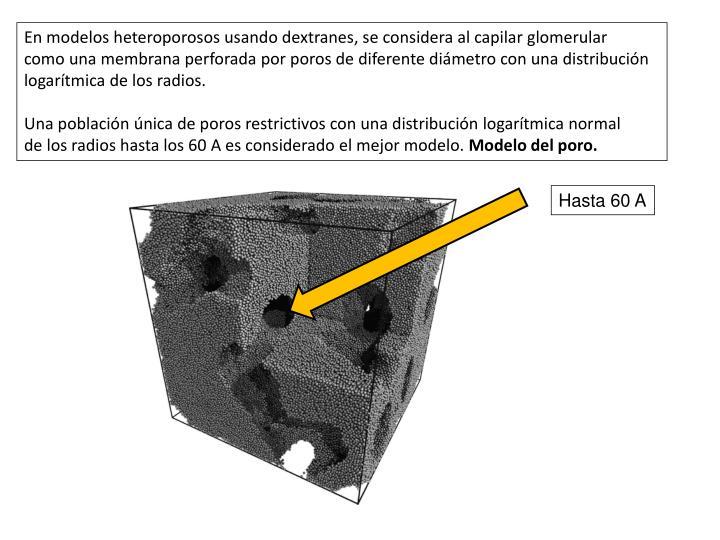 En modelos heteroporosos usando dextranes, se considera al capilar glomerular