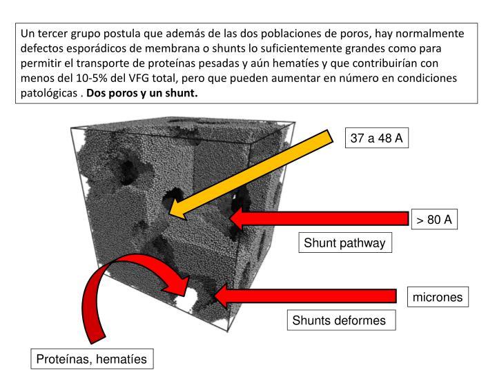 Un tercer grupo postula que además de las dos poblaciones de poros