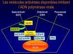 les mol cules antivirales disponibles inhibent l adn polym rase virale