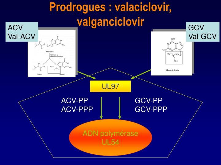 Prodrogues : valaciclovir, valganciclovir